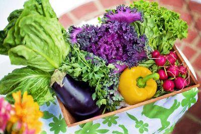 Организация и выполнение работ по производству продукции растениеводства